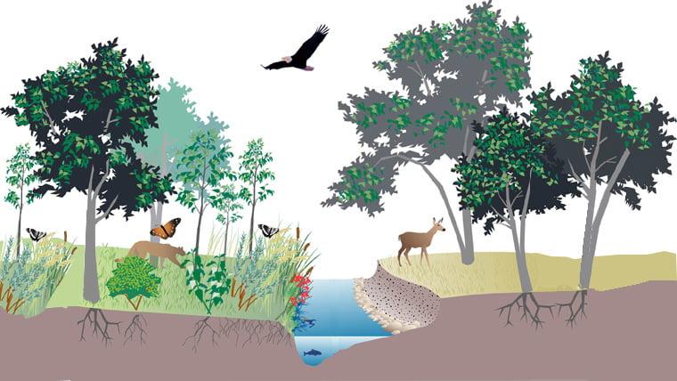 Makalah Peranan Tumbuhan dalam Menjaga Keseimbangan Ekosistem Lengkap
